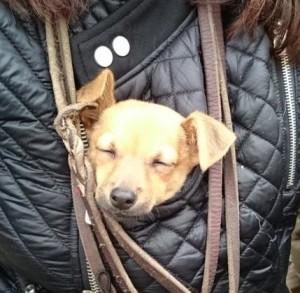 promenade de chien sur Paris