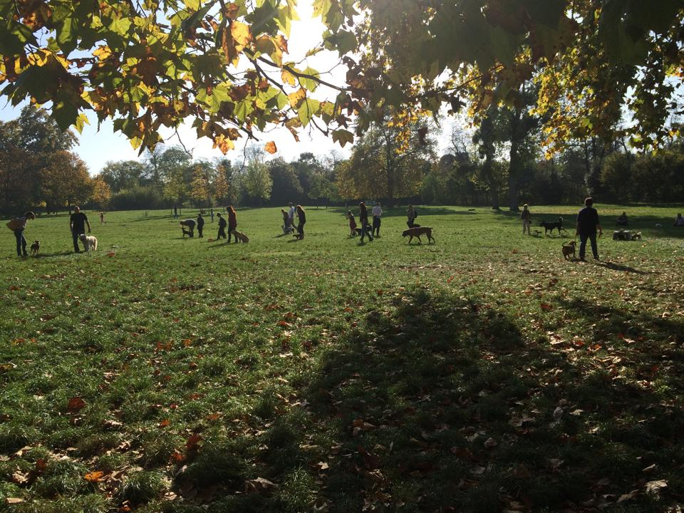 balade de chien dans un parc parisien