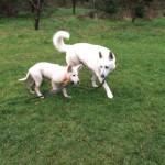 Tarif et prix pour notre service de promenade et de balade de chien à Paris