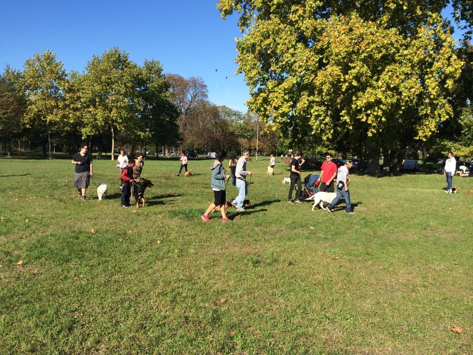 cours d'éducation canine au Bois de Vincennes