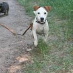 Contactez-nous pour la promenade de votre chien à Paris 11