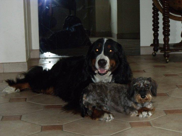 pension canine en région parisienne