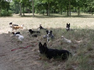 sortie canine au Bois de Vincennes
