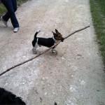 Jeux au bois de Vincennes