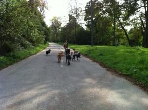 balade canine près de Montreuil