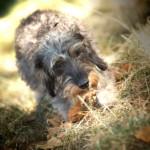 Comprendre les agissements de votre animal