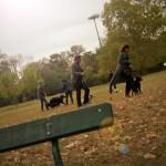Pour la promenade de votre chien à Paris Tolbiac, contactez-nous