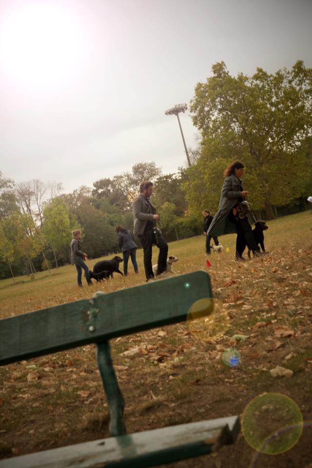 promenade de chiens à Paris Tolbiac