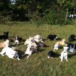 Les étapes du dressage pour chien