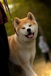 la promenade de votre chien en Ile de France