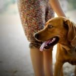 Formation d'éducateur canin et école d'éducateur canin à Paris