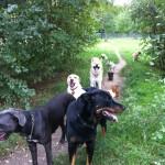 La promenade de votre chien à Paris Ménilmontant