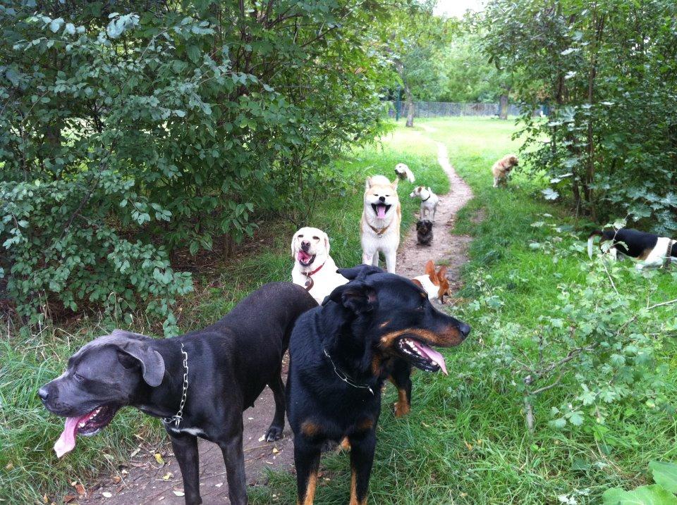 promenade de votre chien à Paris 13