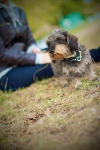 balade et garde de votre chien près du 12ème arrondissement de Paris