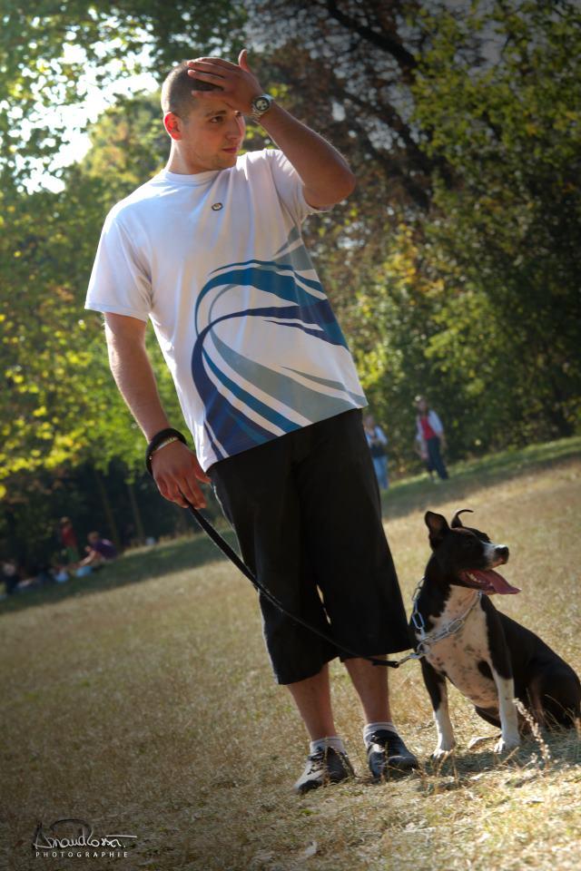 apprendre à promener un chien avec une laisse