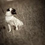 Combien cela coûte de faire promener son chien à Paris et en région parisienne ?