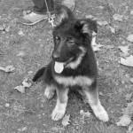 Eduaction canine au bois de Vincennes