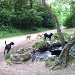 balade canine à Vincennes