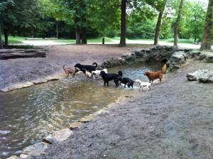 pension pour chien près de Charenton le Pont
