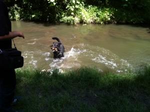 baignade de chiens dans le Bois de Vincennes