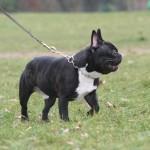 Des idées pour promener votre chien près du quartier de Paris Alésia