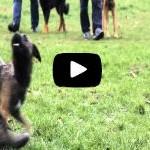 Présentation en vidéo de notre école d'éducation canine sur Paris
