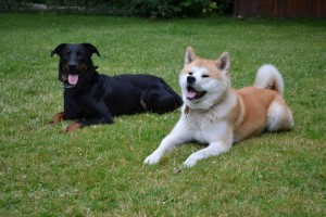 balade et pension pour chien près de Paris