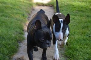promenade de votre chien sur Le Perreux sur Marne
