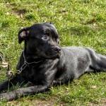 Quelles solutions pour la balade de votre chien dans le 13ème arrondissement de Paris ?