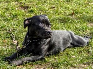 contactez-nous pour la promenade de votre chien dans le 13ème arrondissement de Paris