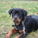 Les services Acte Chien pour la promenade de votre chien dans le Seizième