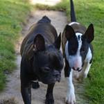 Contactez-nous pour la balade de votre chien sur Villejuif
