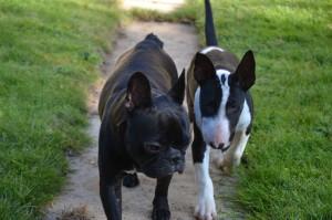 balade de deux chiens en région parisienne