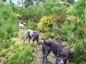 une balade canine dans le Bois de Vincennes