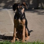 Nos solutions pour la promenade de votre chien sur Bagneux