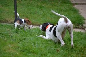 sortie canine à Nogent sur Marne