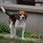 Les avantages de notre service de promenade de chien sur Montrouge