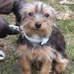 Confiez nous la balade de votre chien dans le 12ème arrondissement de Paris