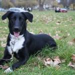 Contactez Acte Chien pour la promenade de votre chien dans le Quinzième, à Paris