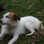 Pourquoi promener votre chien dans le 7ème arrondissement de Paris ?