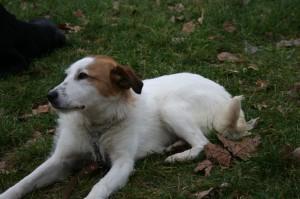 balade de votre chien dans le 7ème arrondissement