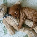 Découvrez les atouts de notre pension canine proche de Vitry sur Seine