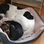 Offrez à votre chien un séjour agréable, dans notre pension canine près de Montrouge