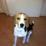 Confiez-nous la garde de votre chien sur Villejuif ! Bien-être assuré pour votre compagnon !