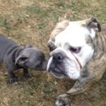 Découvrez notre méthode d'éducation canine. Contactez-nous pour un cours de dressage de chien près du 8ème arrondissement de Paris