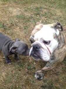 comportementaliste canin sur Paris 8