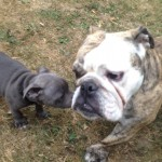 Profitez de notre service d'éducation canine et de dressage de chien proche de Vitry sur Seine !