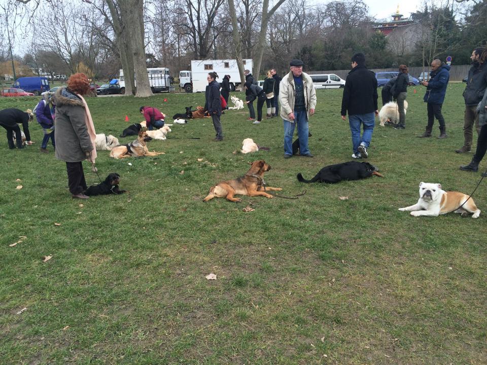 Dressage chien et éducation canine Le Kremlin Bicetre