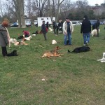 Découvrez les services d'un comportementaliste pour chien proche du 11 e arrondissement de Paris