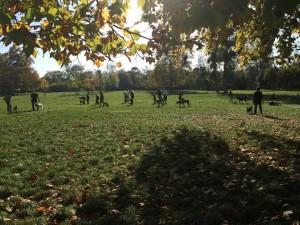cours d'éducation canine dans le Bois de Vincennes
